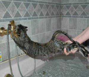 http://www.all4humor.com/picture/funny-animal-pictures/cat-hates-water.html