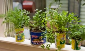 From http://relish.com/articles/indoor-herb-garden/