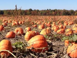 pumpkins-92101_640